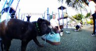 king-puppy-supreme-nike-sb